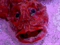 Crying Fish