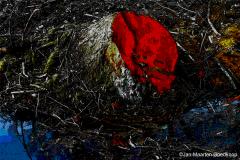 The Bleeding Tree
